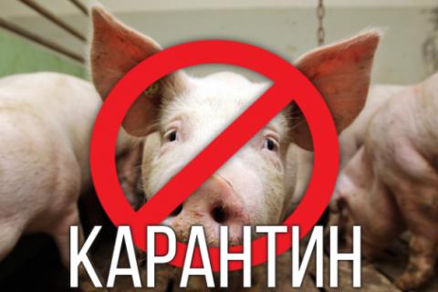 Рішеннями  комісій  оголошено карантин щодо африканської чуми свиней
